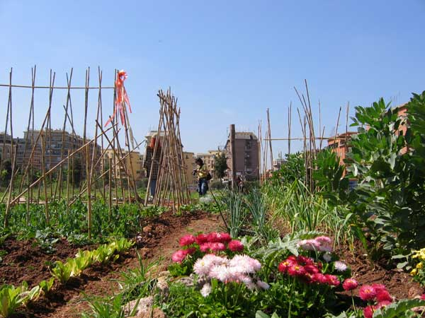 orti-e-giardini-condivisi-romani-credit-zappata-romana-26