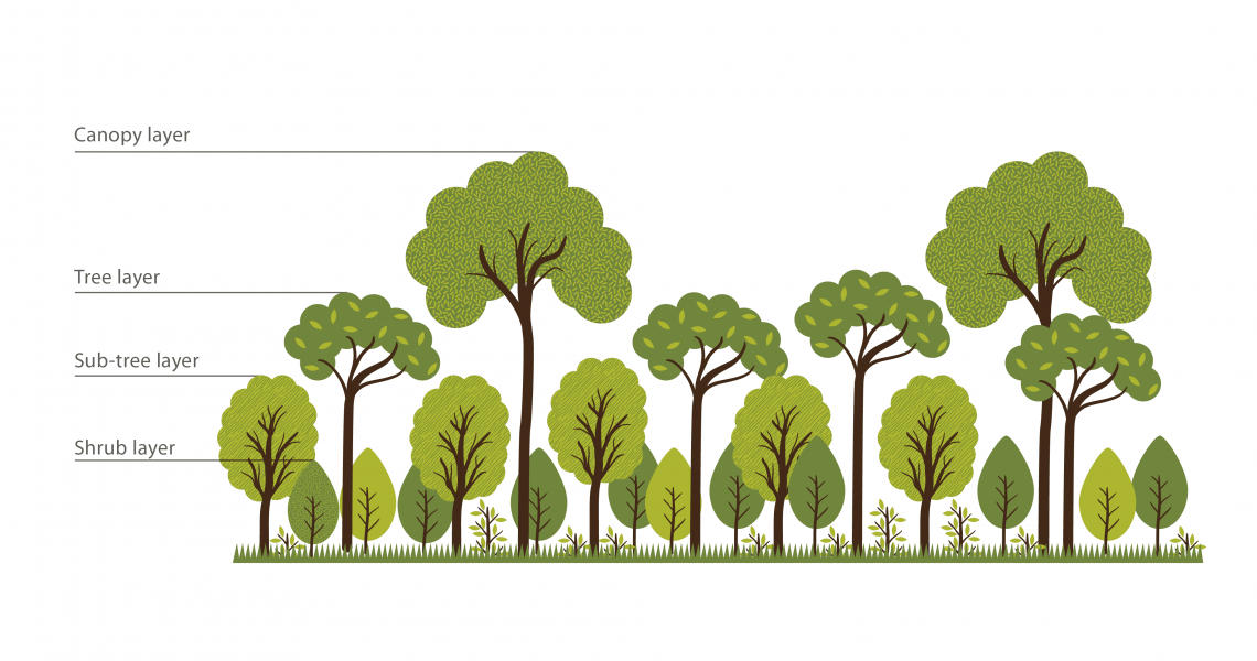 one-of-the-key-fundamentals-creation-of-dense-multi-layered-native-forests