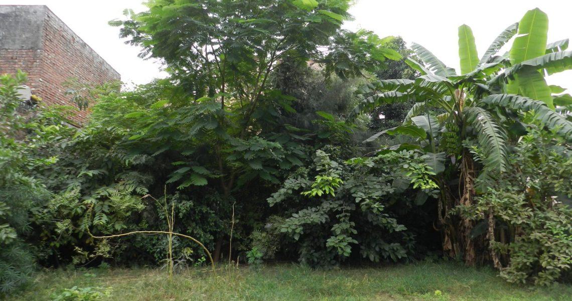 our-first-forest-kashipur-uttarakhand